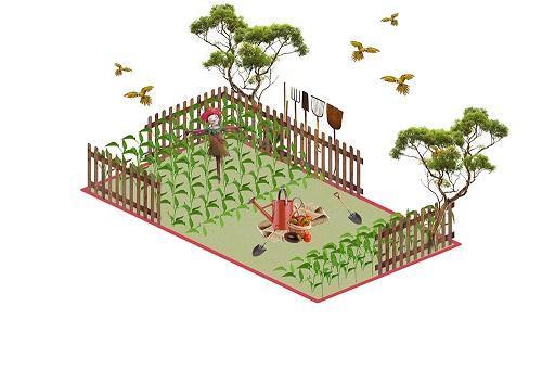 Little-Farmers-Field